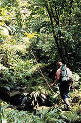 Walking, Backpacking and Hiking in Costa Rica